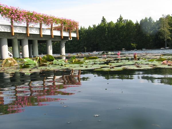 Озеро Хевиз - бальнеологический курорт Венгрии